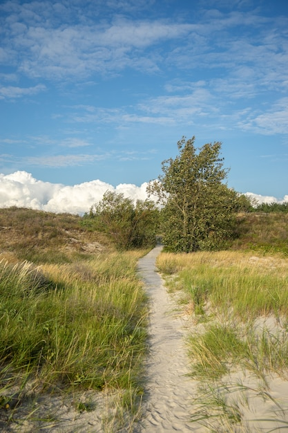 Percorso in un campo coperto di erba e alberi sotto un cielo nuvoloso e luce solare Foto Gratuite