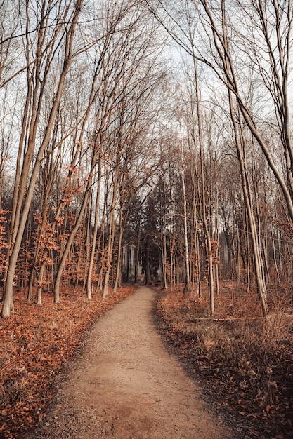 Percorso in una foresta circondata da foglie e alberi sotto un cielo nuvoloso Foto Gratuite
