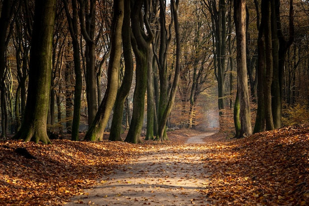 Pathway in a forest surrounded by trees and leaves during the autumn Free Photo