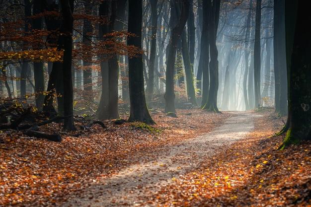 木々に覆われた森の中の小道と秋の日差しの下の葉 無料写真