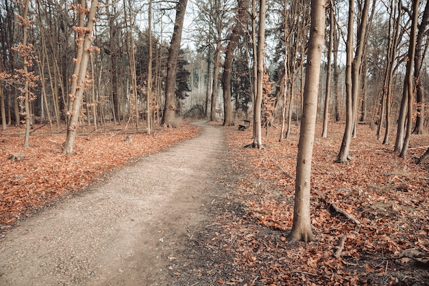 曇り空の下で葉と木々に囲まれた森の中の小道 無料写真