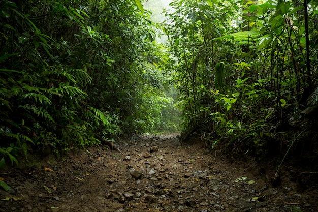 コスタリカの雨季の熱帯雨林の経路 Premium写真