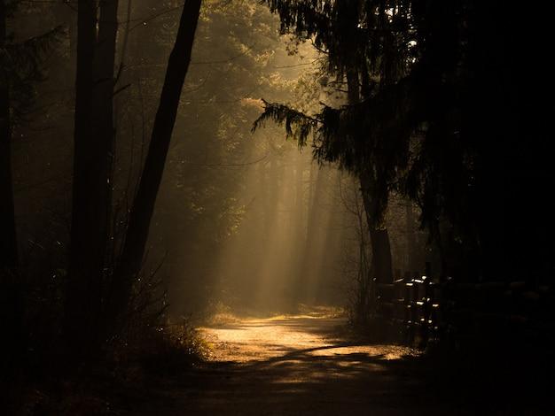 森の真ん中にある小道、日光が遠くに 無料写真