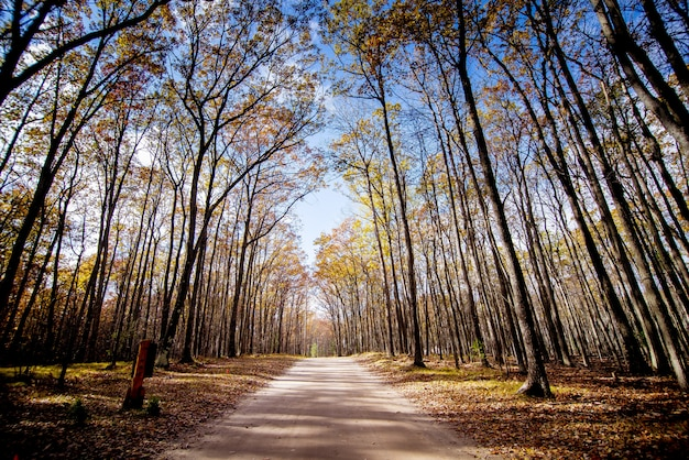Pathway in the middle of a forest with tall leafless trees and a blue sky in the background Free Photo