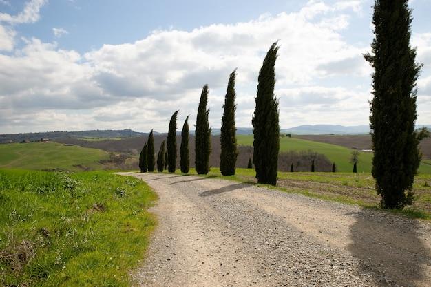Sentiero in mezzo a campi erbosi e alberi con un cielo nuvoloso blu Foto Gratuite