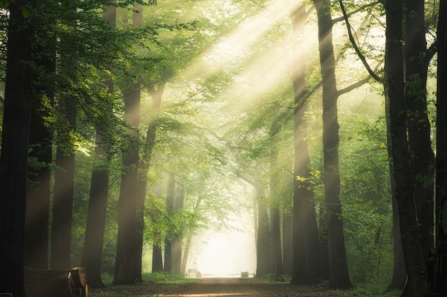 Pathway in the middle of the green leafed trees with the sun shining through the branches Free Photo
