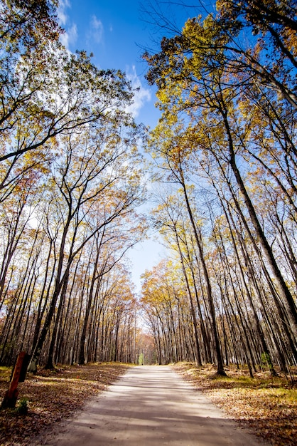 Pathway in the middle of tall trees with a blue sky Free Photo