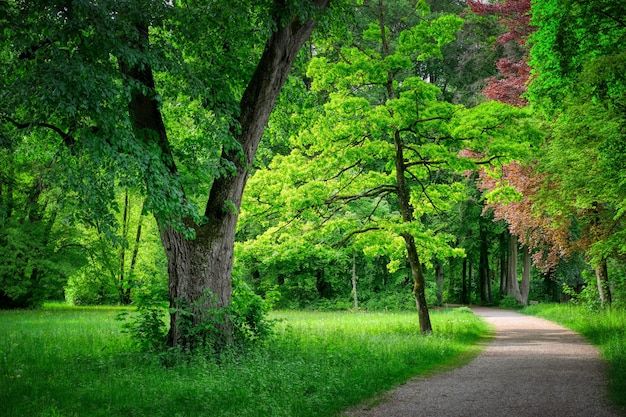 Pathway surrounded by greenery in a forest under the sunlight Free Photo