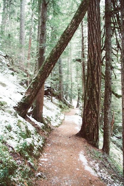 Percorso circondato da alberi e muschi coperti di neve sotto la luce del sole Foto Gratuite