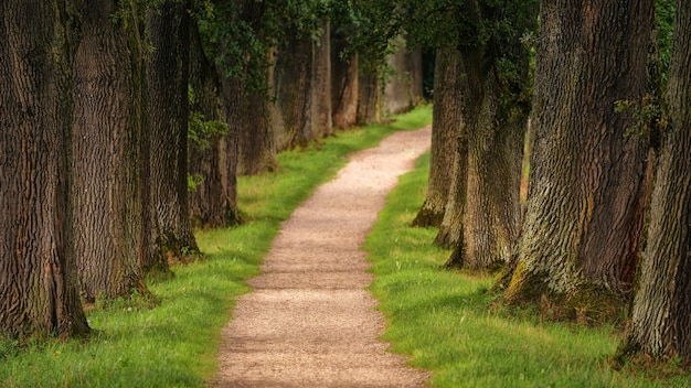 Pathway of trees during daytime Free Photo