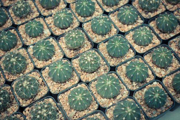 Pattern of clay pots cactus Premium Photo