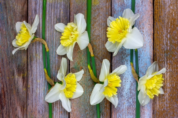 The pattern of flowers narcissuses at retro wooden background Premium Photo