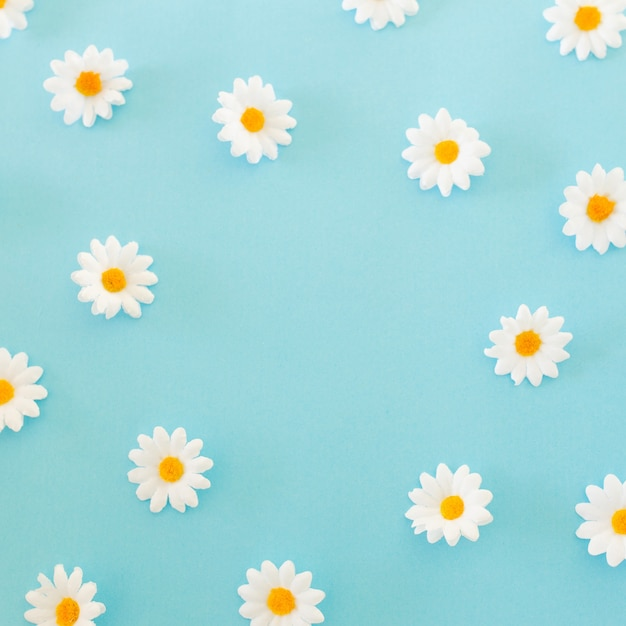 Pattern made of chamomiles, petals on blue background. flat lay, top view Free Photo