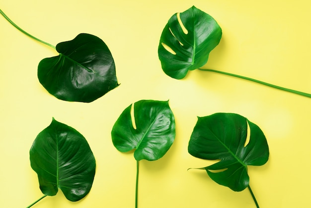 Pattern of tropical monstera leaves on yellow background. flat lay. top view. pop art design, creative and exotic summer concept. minimal style. Premium Photo