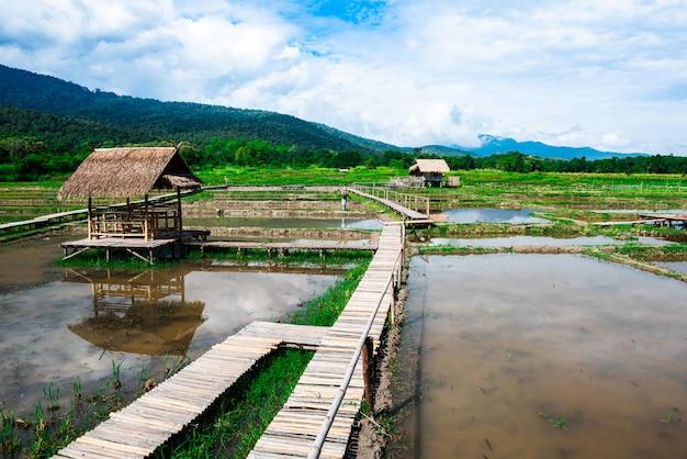 Павильон с соломенной крышей на рисовом поле Premium Фотографии