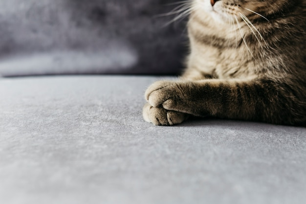 Paws of gray cat Free Photo