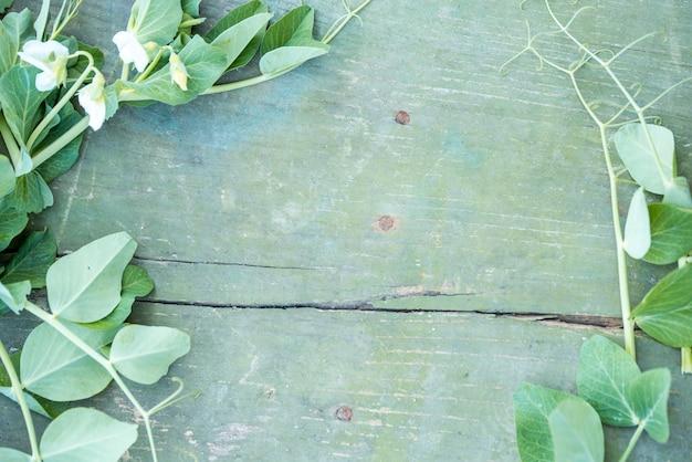 Pea flowers on a blue vintage background. cracked paint. plant loach flies a wooden log Premium Photo
