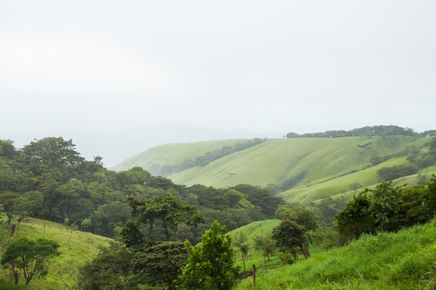 Peaceful green mountain in tropical costa rica Free Photo