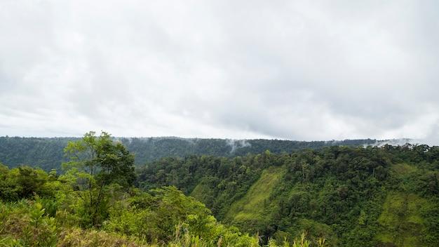 Peaceful tropical rainforest against cloudy sky Free Photo