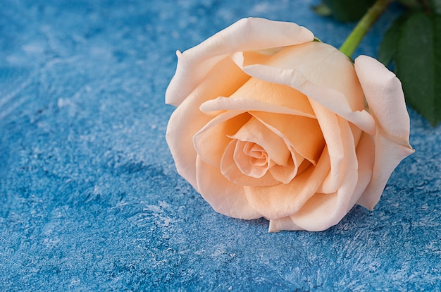 Peach color  rose on a blue and white acrylic paint background Premium Photo