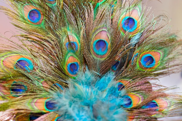 Peacock feathers with high detail selective focus at center. Premium Photo