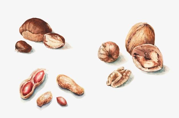 Peanuts chestnuts whole and half walnuts Premium Photo