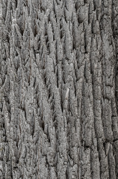 Pear tree bark texture, tree skin texture, old bark texture Premium Photo