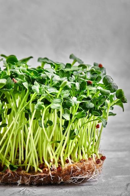 Микрозелень гороха с семенами и корнями. проращивание микрозелени на ковриках для выращивания джутовых микрозелени. проращивание микрозелени на биоразлагаемых циновках из конопли. Premium Фотографии