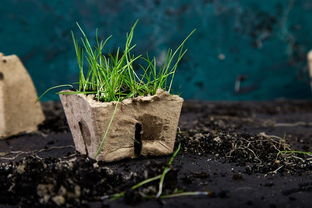 Peat pots with young seedlings on soils Premium Photo