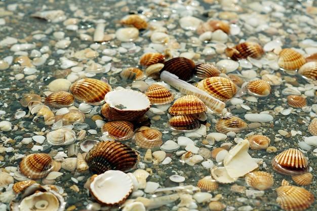 Ciottoli, crostacei e lumache ricoperti d'acqua Foto Gratuite