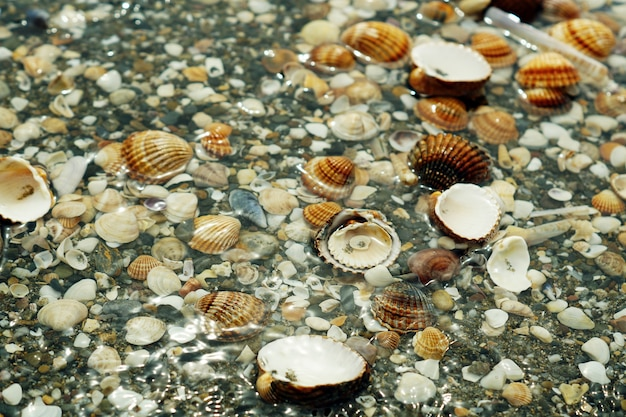 Pebbles, shellfish and snails covered in water Free Photo