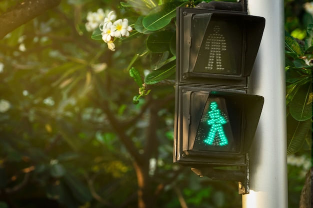 Pedestrian signals on traffic light pole. pedestrian crossing sign for safe to walk in the city. crosswalk signal. green traffic light signal on blurred background of plumeria tree and flowers. Premium Photo