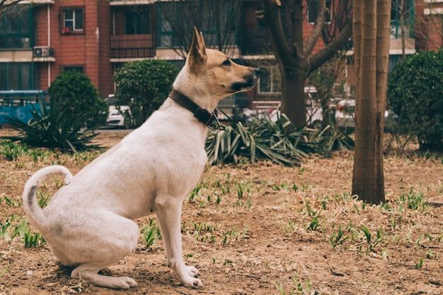 Pedigreed dog on walk in city Free Photo