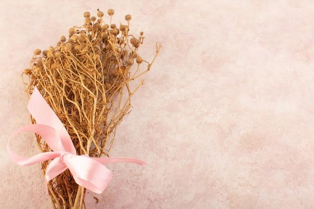 Peganum harmala pianta essiccata sul tavolo rosa pianta foto a colori albero Foto Gratuite
