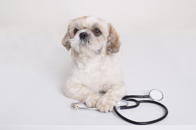 Cucciolo di cane di pechinese con lo stetoscopio vicino alla sua posa delle zampe Foto Gratuite