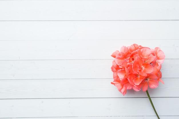 Pelargonium, garden geranium, rose geranium flower on white wooden background with copy space. Premium Photo
