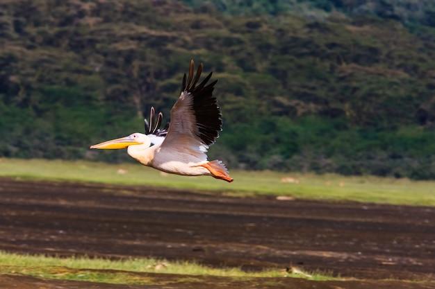 ペリカンが飛んでいます。ナクル、ケニア Premium写真