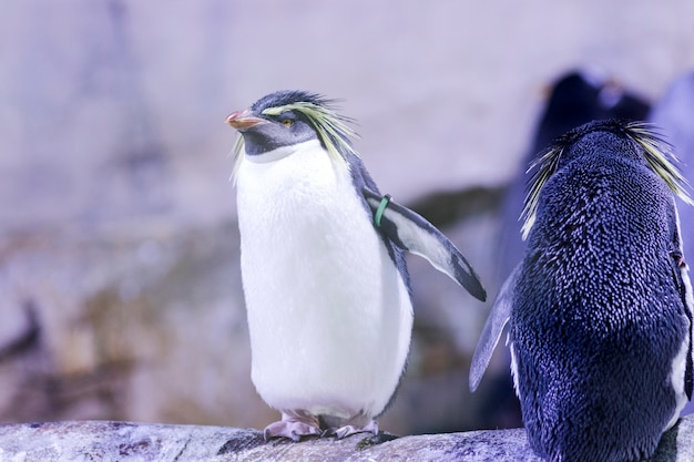 penguin on a rock with other penguins photo premium download