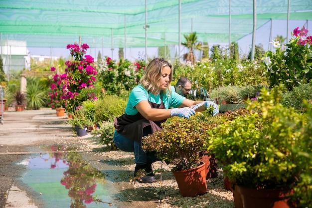 Donna pensierosa che coltiva piante in vaso in serra, tagliando rami con potatore. grandangolo, copia dello spazio. concetto di lavoro di giardinaggio Foto Gratuite