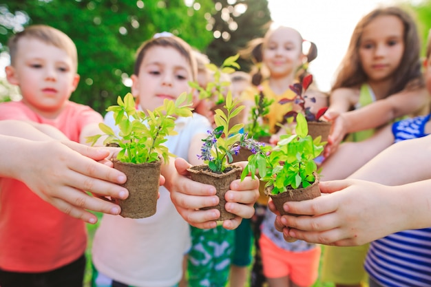 People hands cupping plant nurture environmental Premium Photo