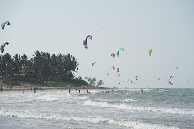 People kiteboarding on a beach near the trees in the dominican republic Free Photo