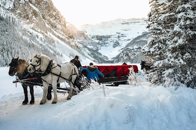 People near the wagon with forest in the snowy forest near the lake louise in canada Free Photo