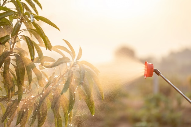 People spraying water or fertilizer to young tree in garden Premium Photo