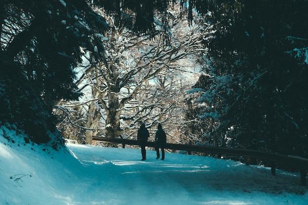 Persone che camminano su un sentiero di neve con ringhiere sotto una tettoia di alberi Foto Gratuite