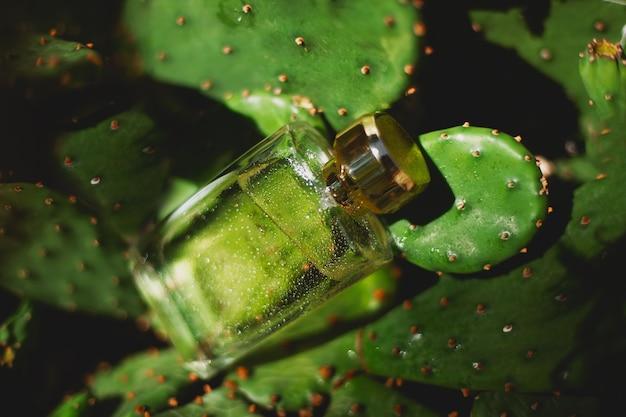 Духи и зеленые кактусы Premium Фотографии