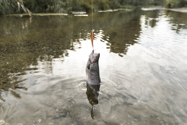 Person fishing a fish with a rod Free Photo