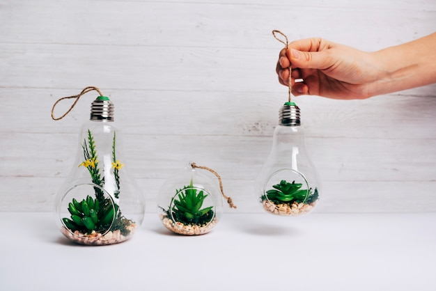 A person holding cactus plant inside the light bulb on white desk against wooden wall Free Photo