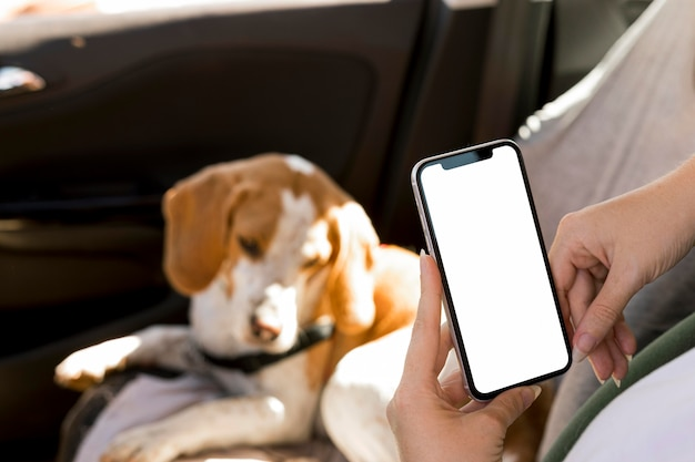 Person holding a mobile phone and blurred dog in background Free Photo