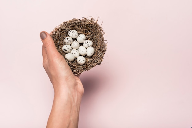 Person holding nest with quail eggs Free Photo