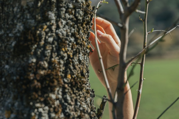 Person touching tree trunk Free Photo